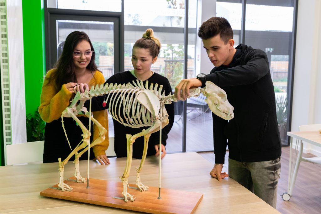 Étudiants voulant devenir ostéopathe animalier
