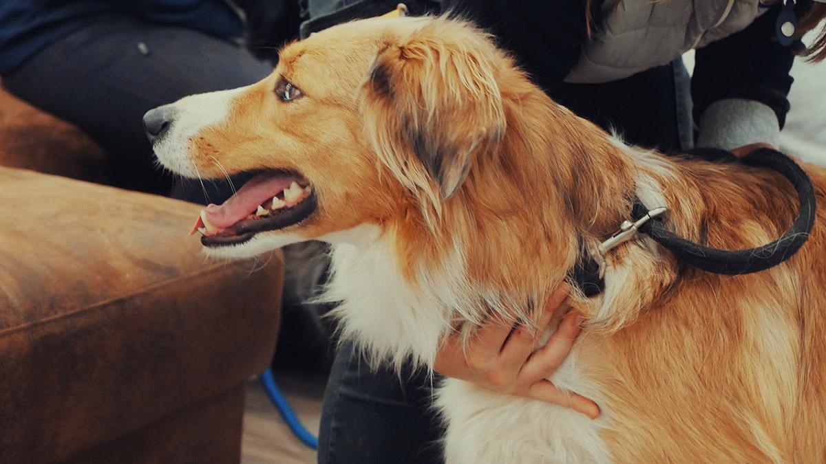 Pratique d'ostéopathie animale sur un chien