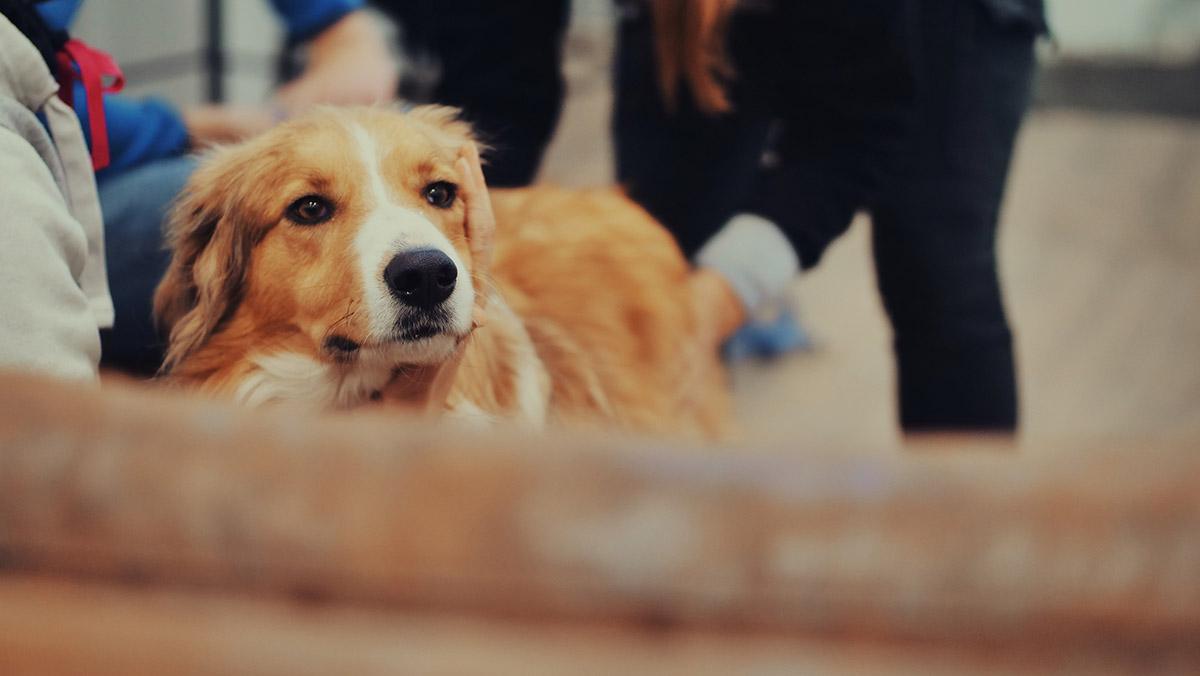 Séance d'ostéopathie canine